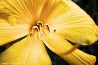 Yellow - July 2012