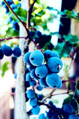 Berry Blues #2 - September 2012