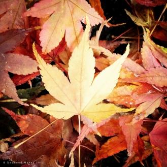 Fallen #1 - November 2012