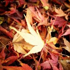 Fallen #4 - November 2012