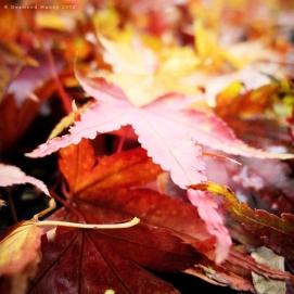 Fallen #5 - November 2012