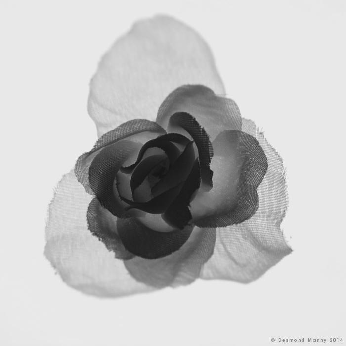 Faux Flower #1 - February 2014