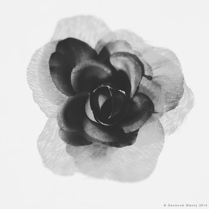 Faux Rose - February 2014