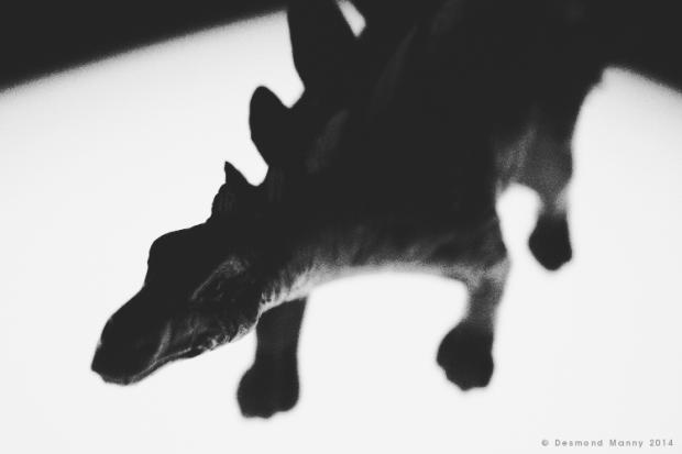 Shadow of the Beast - February 2014