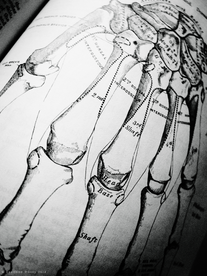 Anatomy #1 - February 2014