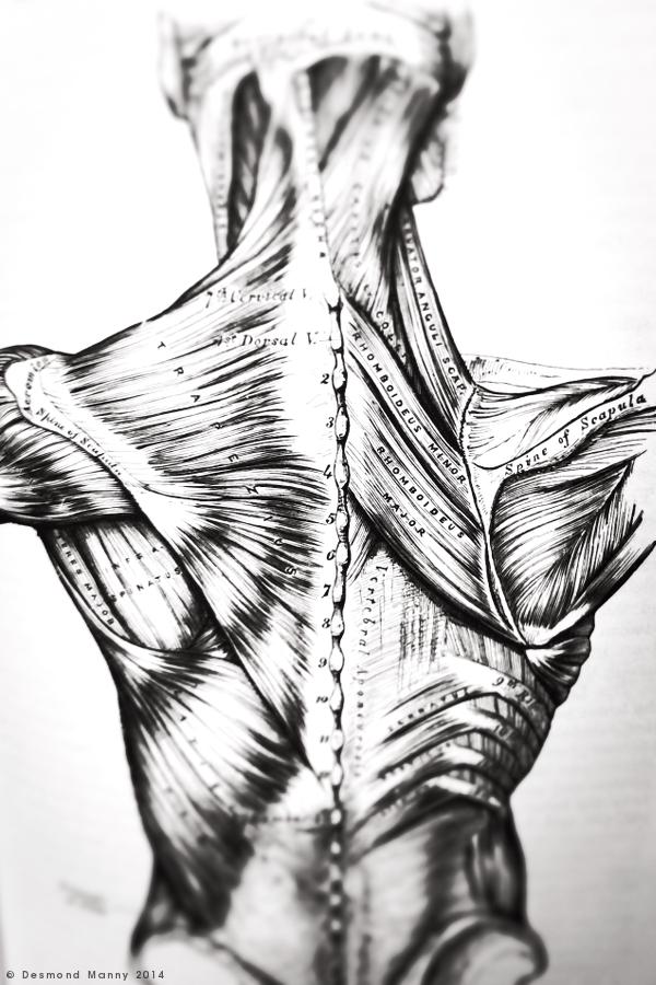 Anatomy #2 - February 2014
