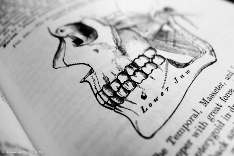 Anatomy #3 - March 2014