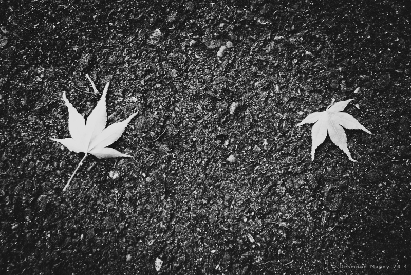 Random Leaves - July 2014