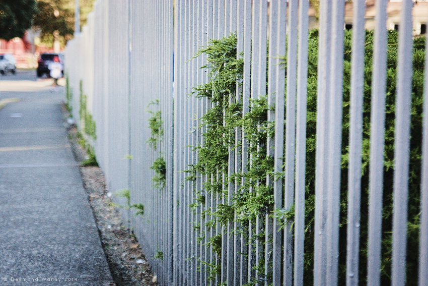 Fence - August 2014