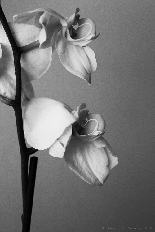 Orchids - 2009