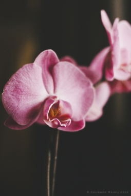 Orchid - March 2014