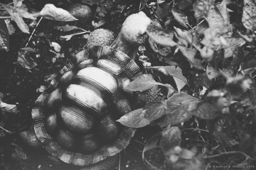 The Hidden Turtle - October 2014
