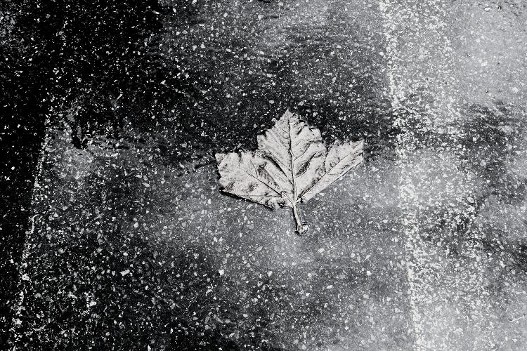 Leaf & Line #2 - October 2014