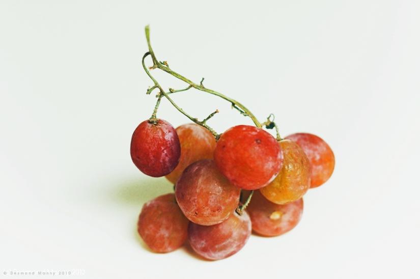 Grape Study - 2010