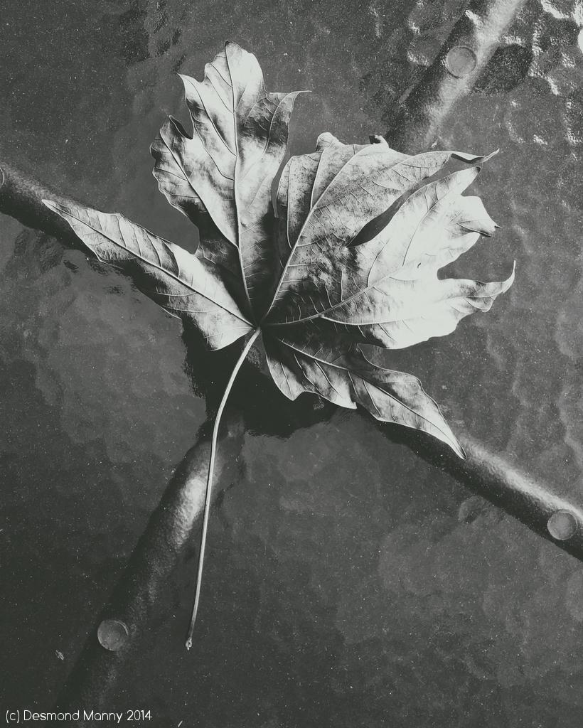 Leaf on Table - November 2014
