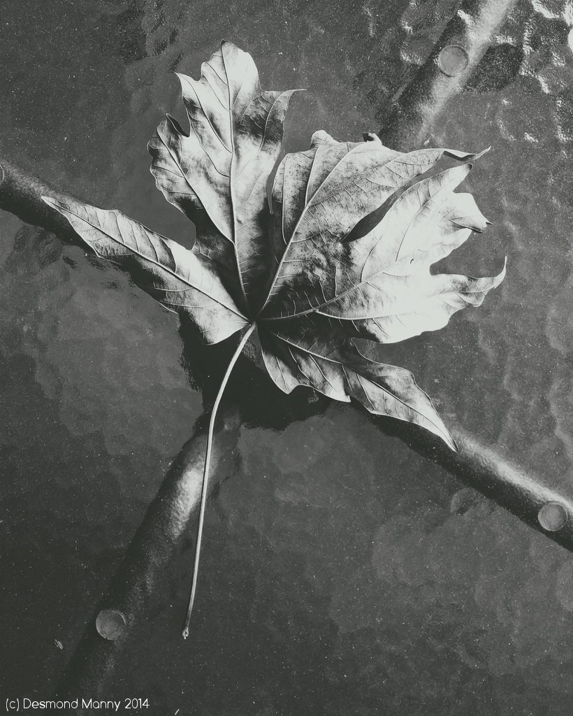 Leaf on Table - November 2014
