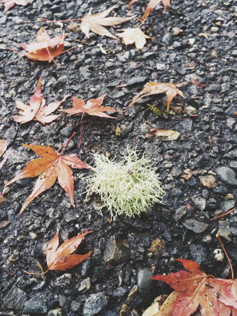 Moss - November 2014