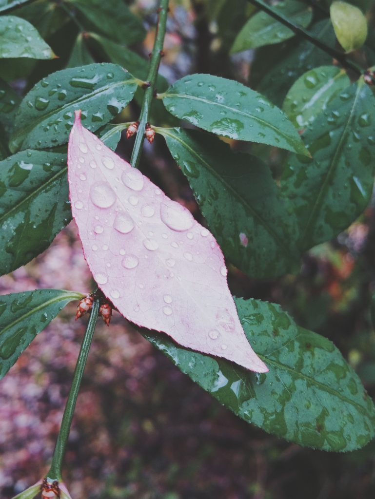 Leaf & Raindrops - November 2014