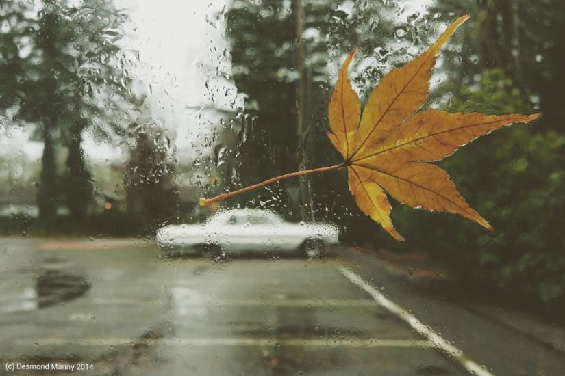 Untitled - November 2014