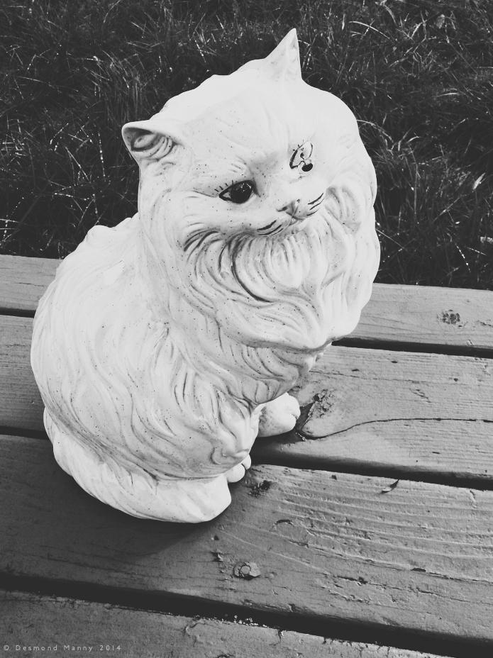 One-eyed Cat - November 2014