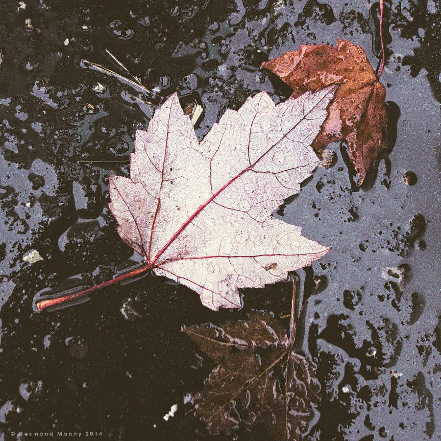 The Rains Came - November 2014