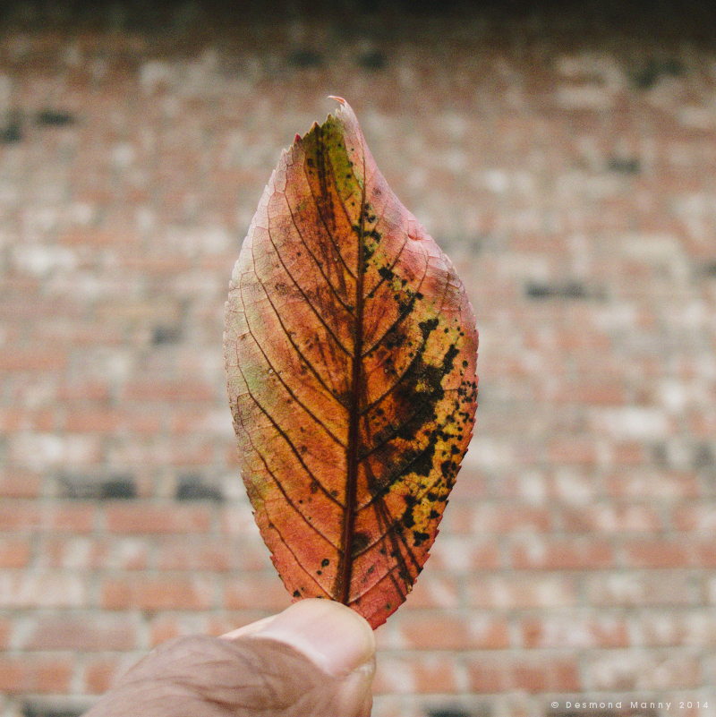 Leaf + Brick - November 2014