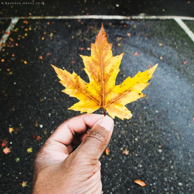Leaf + Asphalt - November 2014