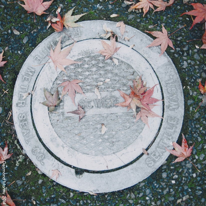 Sewer - November 2014
