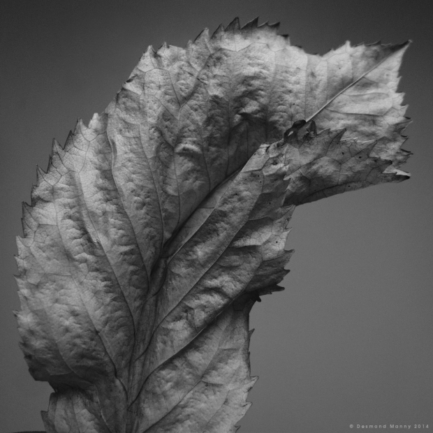 Leaf Study #989796 - November 2014