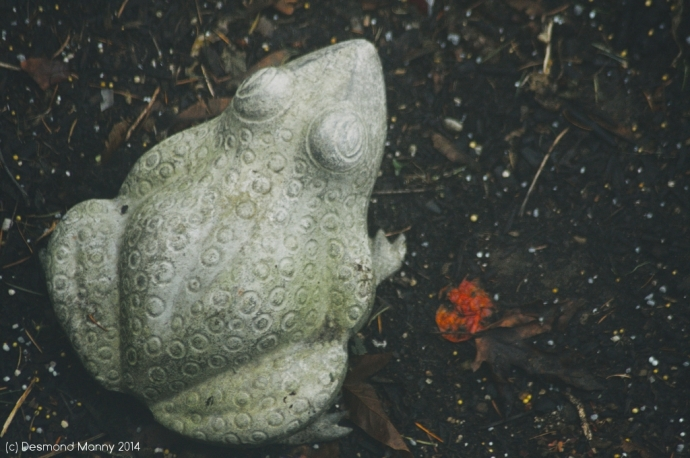 Stone Toad - December 2014