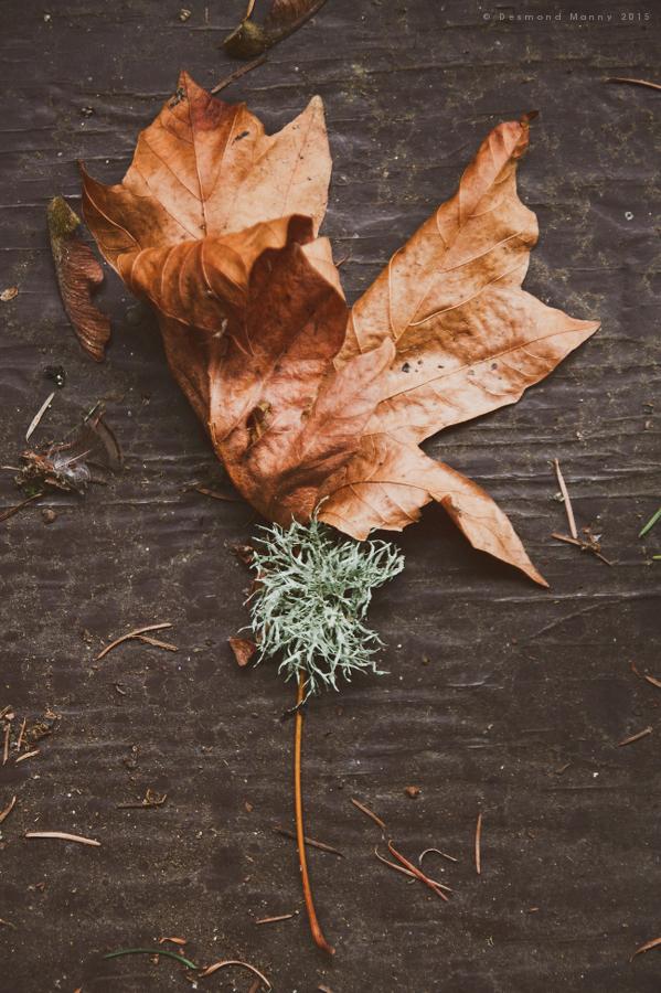 Leaf & Moss - January 2015
