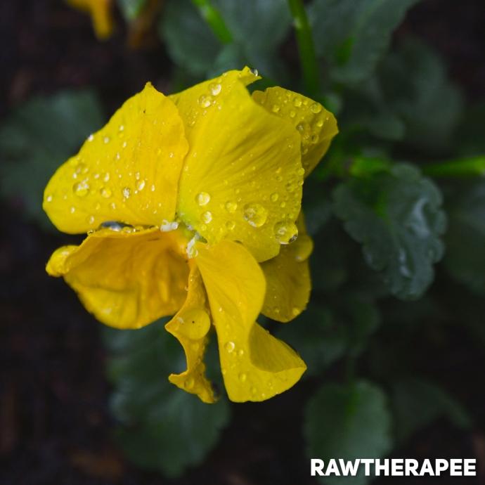 Rawtherapee Processed