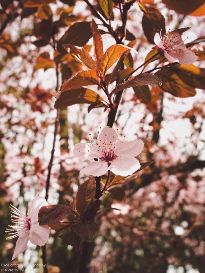 Sakura #3 - March 2015
