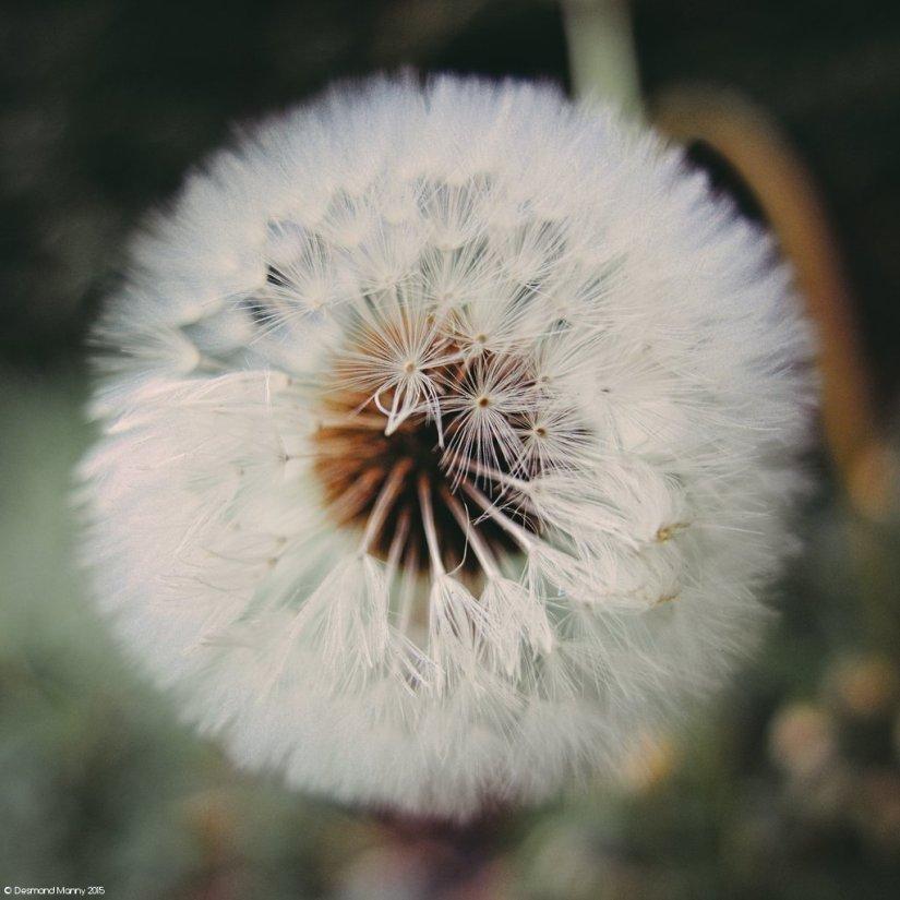 Seedhead #1