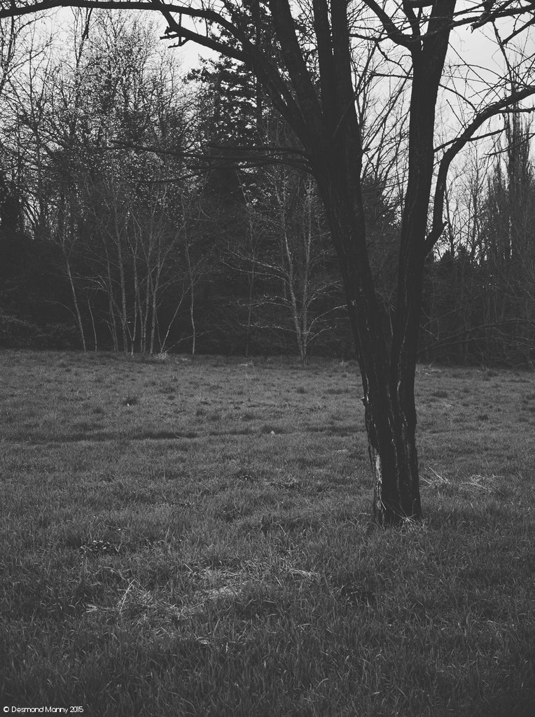 Photos From the Edge of the Forest #2