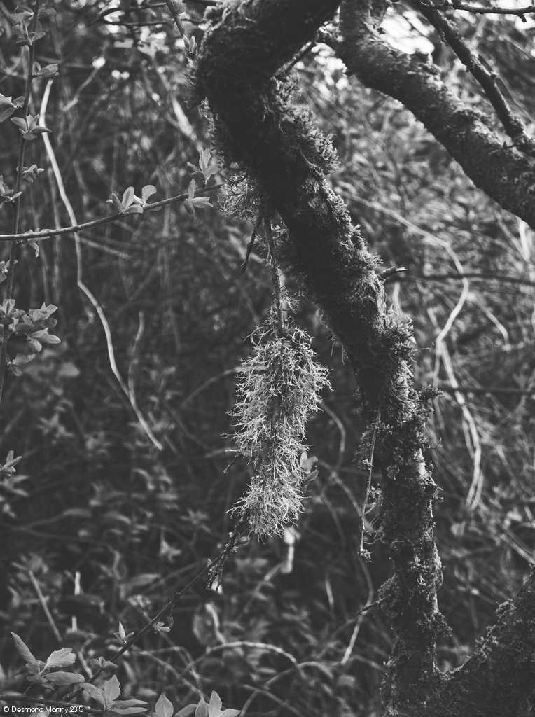 Foresty Things #1