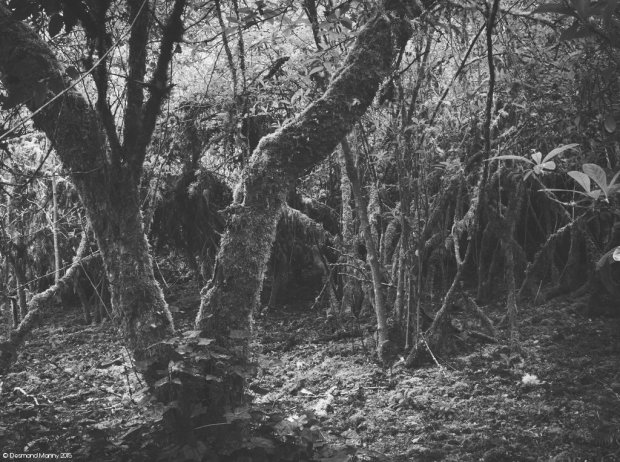 Foresty Things #2