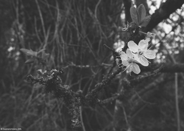 Foresty Things #3
