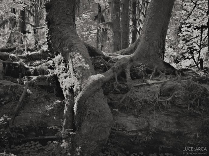 Hoh Rainforest 10
