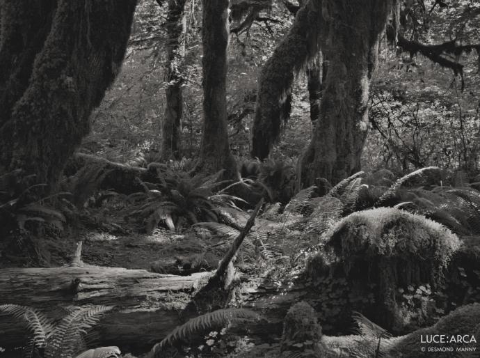 Hoh Rainforest 12