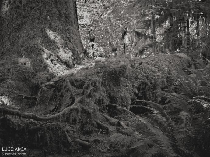 Hoh Rainforest 13