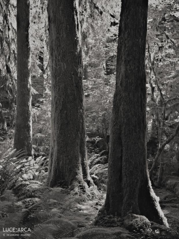 Hoh Rainforest 14