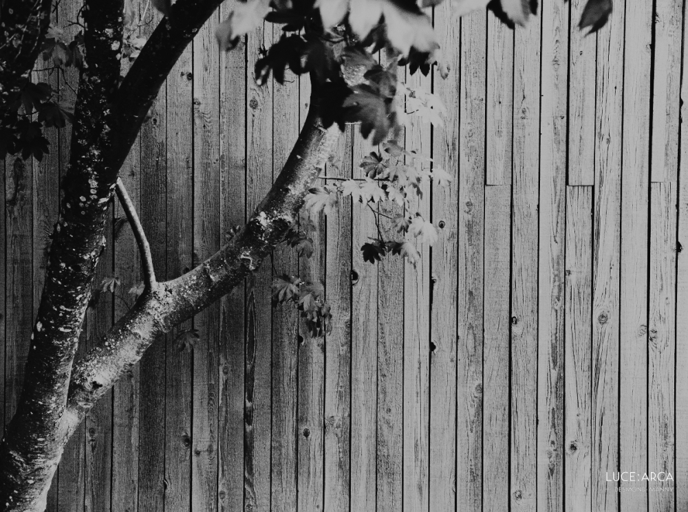 Tree Against Fence