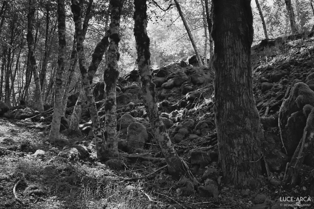 Forest Trail No 3