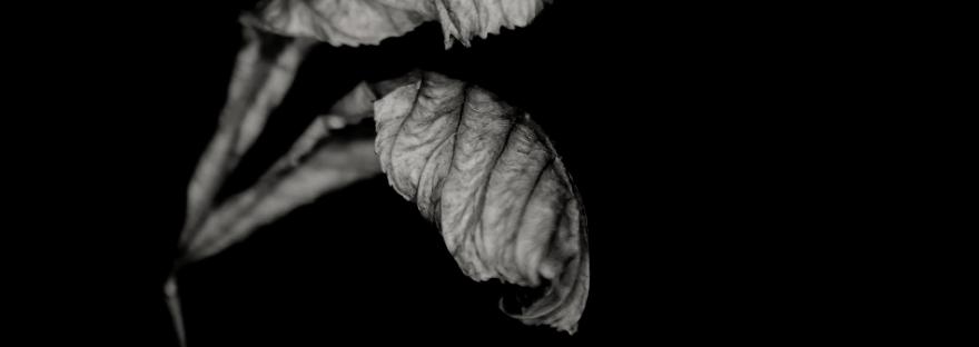 desmond-manny-leaf-study-photography